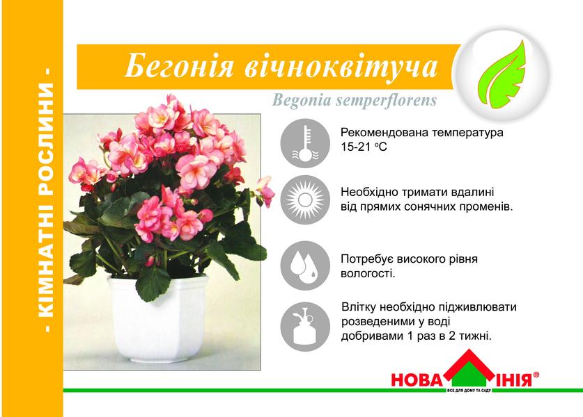 Цветы комнатные описание уход в